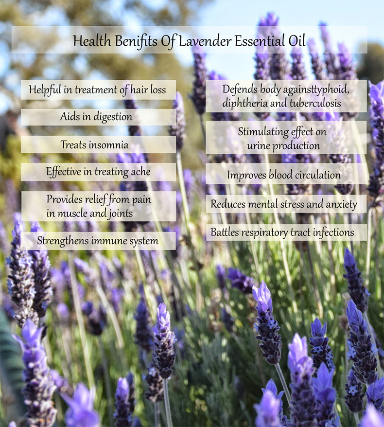 [MPLUS] WHITE SCENT Lavender Essential Oil 5ml